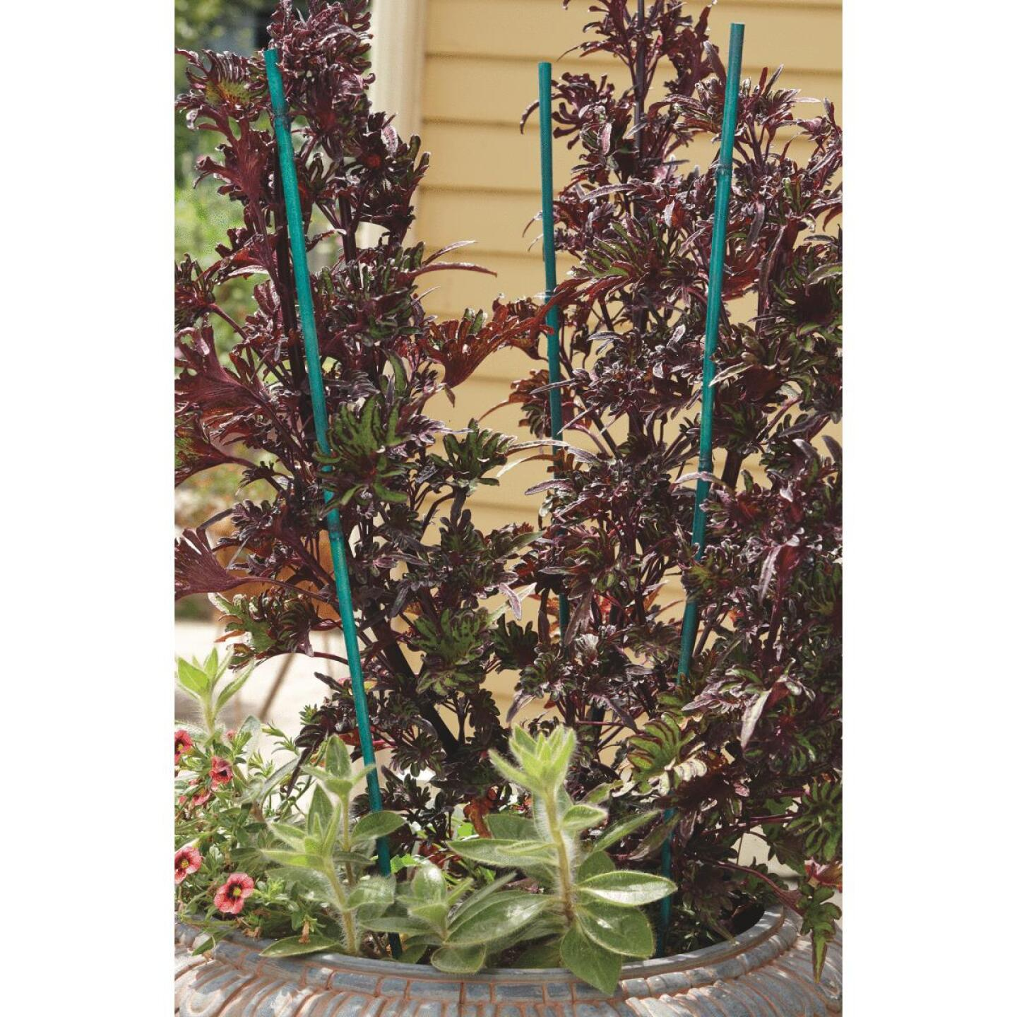 Bond 6 Ft. Green Bamboo Plant Stakes (6-Pack) Image 4